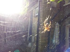 spider_gstreet